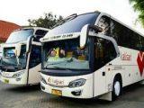 Bus Kalisari Terbaru