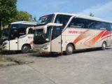 Armada Bus Murni Jaya